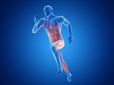 Illustration of a jogger's muscles