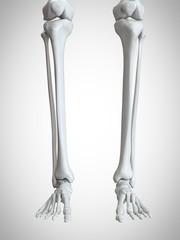 Illustration of the lower leg and foot bones