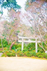 Japanese garden in Osaka, Japan. Osaka is one of the important cities in Japan for cultures and business markets.