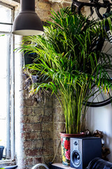Trendy, hipster flat with green palm houseplant in a beautiful rosy pot