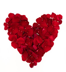 Red Rose Petal Heart Shape Flat Lay on White background
