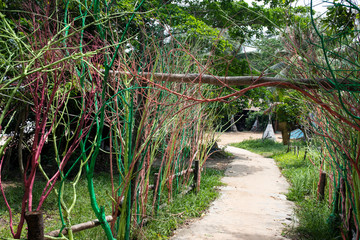 Tropical garden view with walking path and decorative trees. Tropical park decor. Colorful tree branch alley.