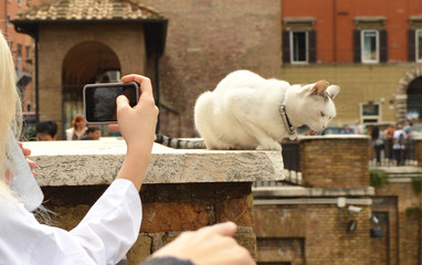 Rome, Italy-October 07, 2018: girl taking pictures on her smartphone cute white cat sitting on the Plaza Largo Di Torre Argentina