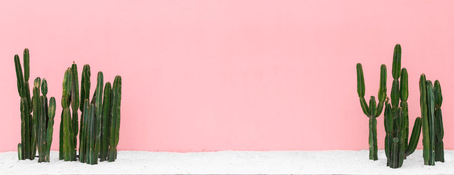 Panorama Cactus on  pink pastel background.hipster style.