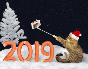 The cat in a Santa Claus hat makes selfie near the number 2019 made from sausage on the snow in the winter forest.