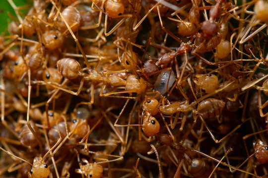 Macro ant colony in nature.