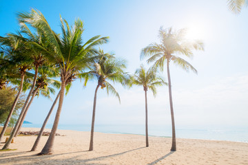 Wall Mural - Beautiful landscape of coconut palm tree on tropical beach (seascape) in summer. Summer background concept.