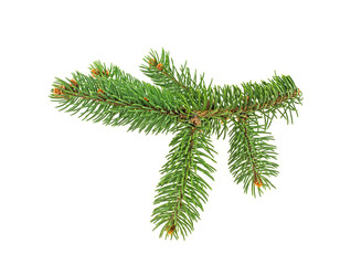 Fir branch on a white background. Christmas template.