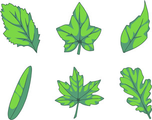 Collection of vector leaves illustrations