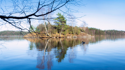 A duck swimming near small island which is reflected in a local lake sweden gothenburg