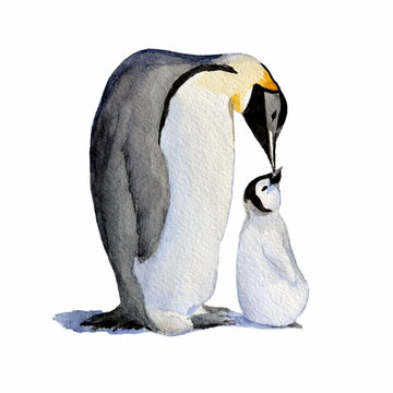 Watercolor mother and baby penguins.