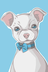 Small white short haired Chihuahua dog  with blue eyes and ribbon collar portrait graphic illustration