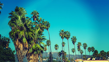 Palm trees row with Hollywood sign on the background