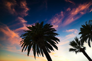 Palm trees under a colorful sky in Los Angeles at sunset