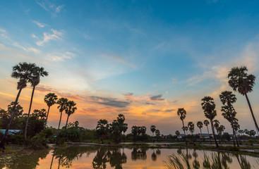 Dong Tan, bang BUA thong, Morning sun reflected in the water field, Tan Dong. The sunset views of Asia