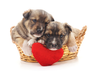 Puppies in a basket with a toy heart.