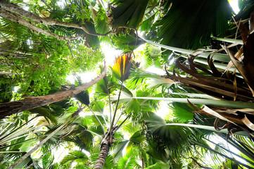 Seychellen Dschungel Landschaft