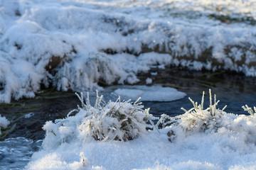 Frozen grass near the stream