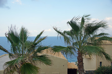 Greek landscape with palm trees and aegean sea