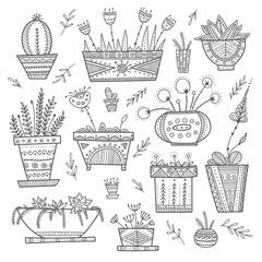 Flower pots and house plants set.