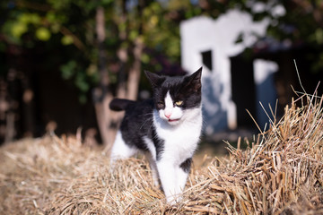 Little cute domestic cat