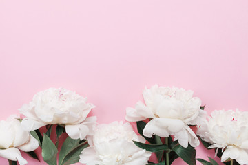 Beautiful white peony flowers on pink pastel table top view and flat lay style. Floral border for Womens day card.