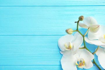 Branch with beautiful tropical orchid flowers on color wooden background, top view. Space for text
