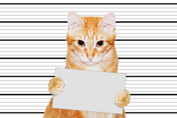 Portrait of ginger cat-prisoner who holds in his paws a empty banner with a copyspace against white background with black lines.