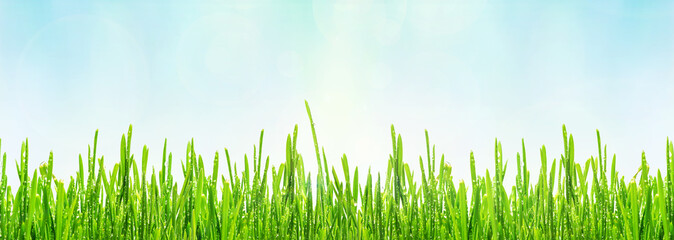 Fototapete - Spring or summer abstract background with green grass with drops of dew and bokeh lights, panoramic banner