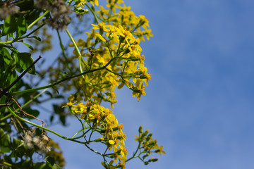 yellow flowers growing on a bush