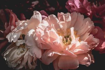 Fotobehang Lush beautiful bouquet of pink and purple peonies