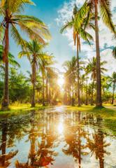 Coconut grove of the pond of Saint-Paul - Reunion island