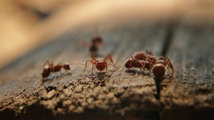 Ants seeing you