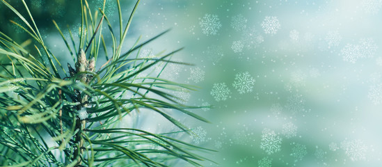 Twigs of an evergreen plant on a light snow texture. Christmas lights, falling snowflakes