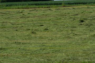 Freshly mown meadow, Germany