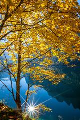 Gelber Ahornbaum im schönen Sonnenlicht am Gosausee (Hochformat)
