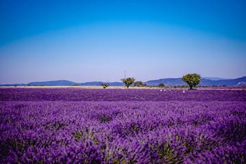 Champ de Lavende à Valensole, Aix-en-Provence, France