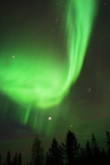 Vivid display of Northern Lights, Aurora Borealis, above forest trees.