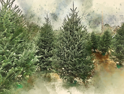 Frasier Fir Christmas tree farm lot watercolor