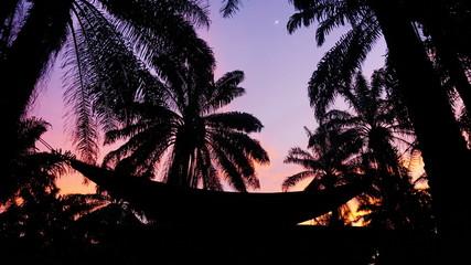 Foto tomada en costa de marfil se. Ven unas palmeras una  amaca y un atardecer
