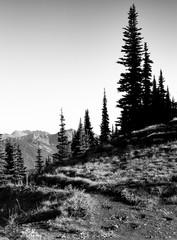 alpine forest trail