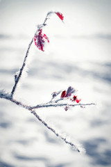 In The Red Of Winter