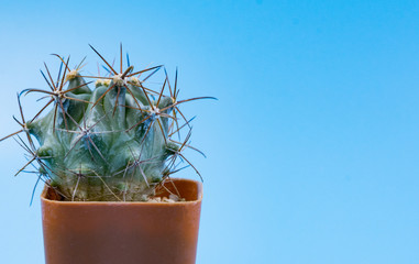 Small cactus on blue background, Copy space