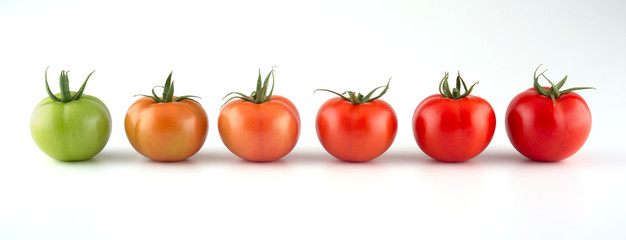 Fototapeta Evolution of red tomato isolated on white background obraz