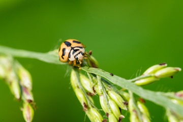 Ladybug on the leaves.