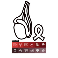 Testicle vector icon
