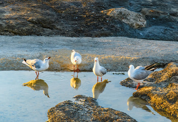 Seagulls and Reflections