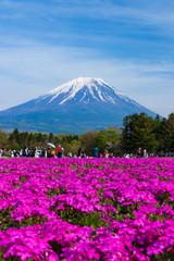 富士芝桜まつり2018