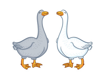 Two geese white and gray, cartoon funny goose isolated on white background, goose domestic nature character, poultry, farm animal vector.