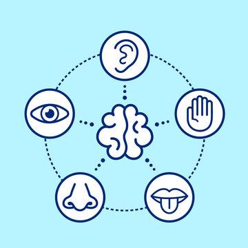 Five human senses surrounding brain.